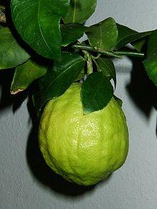 220px-Citrus_medicus_fruit