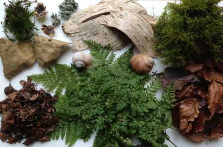 Clockwise left to right: Common haircap moss (Polytrichum commune); Trametes versicolor (turkey tail fungus); unidentified lichen; Silver birch bark (fresh); moss, possibly Hylocomium splendens (glittering wood moss);  fallen beech leaves (this year's); bracken; fallen beech leaves (this year's); silver birch bark (aged).